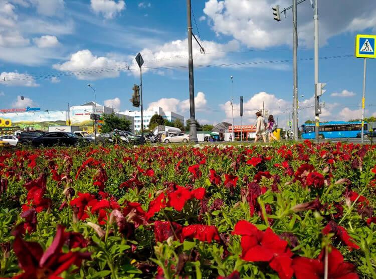 Пример фото цветов на Redmi 6 Pro