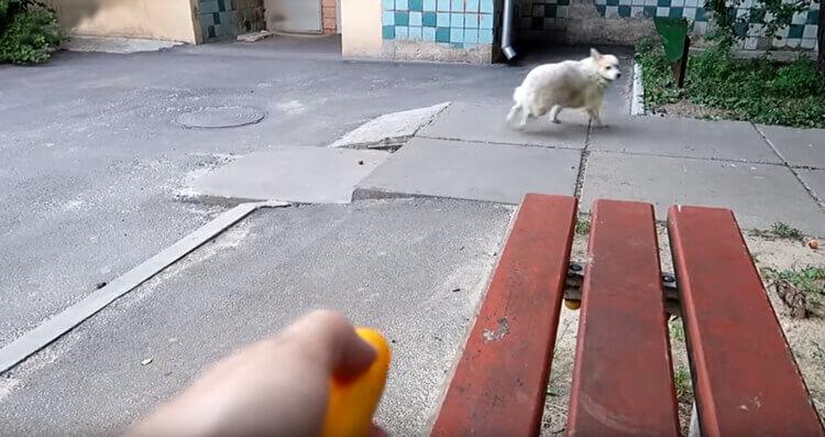Собачки действительно пугаются